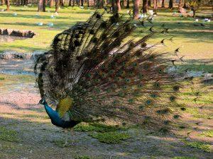 Visite d'une réserve d'oiseaux, à Oléron